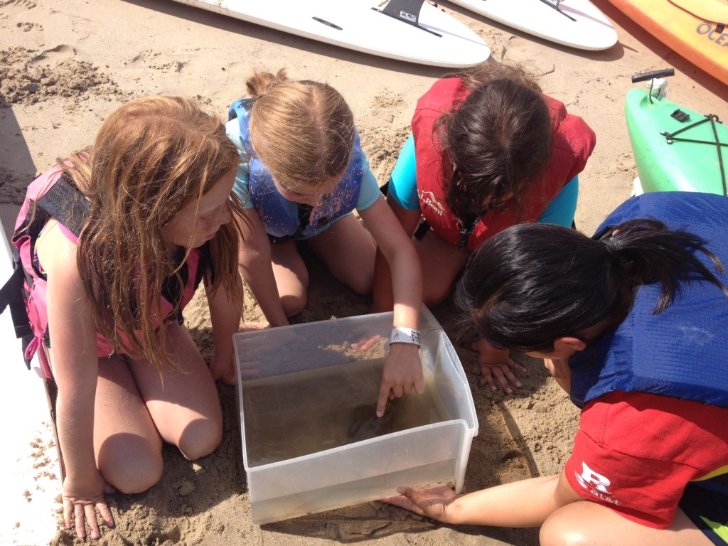 Learning about the estuary, campers observe a Toad Fish as part of a catch and release activity.